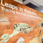 生命大躍進展感想&かはくたんけん隊(クイズラリー)の様子@国立科学博物館