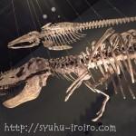 神奈川県立 生命の星・地球博物館【恐竜・動物・虫好きさん集合!】予想以上のボリュームと楽しさ