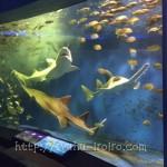 京急油壷マリンパークでのんびり水族館。カワウソ、イルカ、アシカとタッチして癒される。
