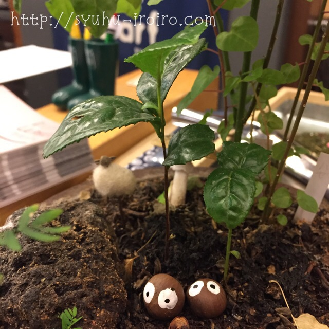 お茶の実と小さな木