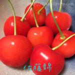 山形のさくらんぼ 佐藤錦と紅秀峰を食べ比べたよ