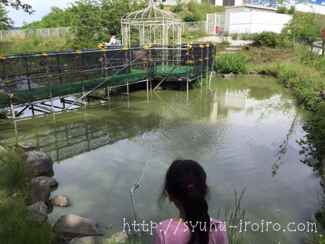 プレジャーフォレスト池の鯉