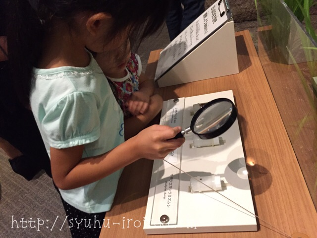琵琶湖博物館展示
