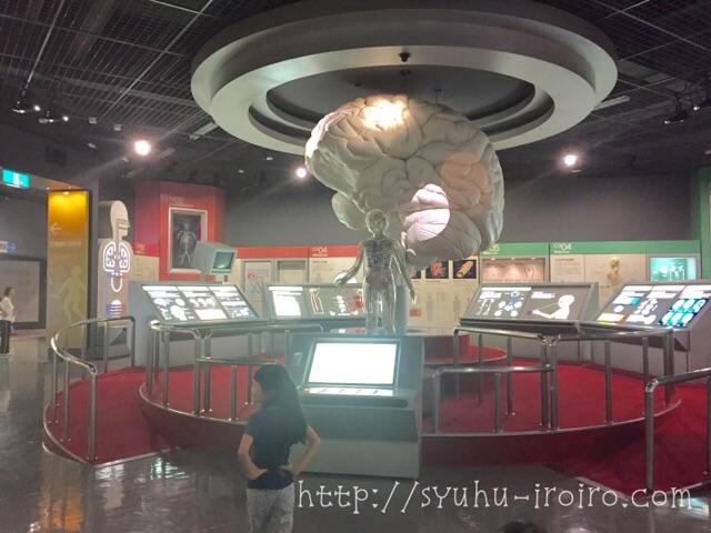 人体の科学展示