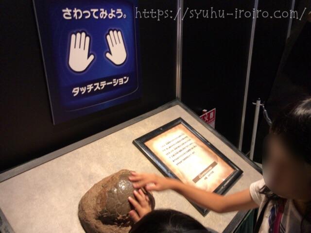 触れる化石