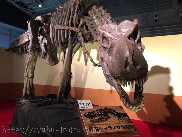ティラノサウルス スタン