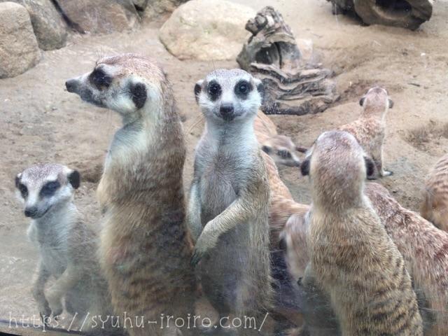 ミーアキャット動物園