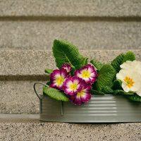 階段とお花